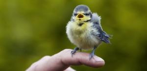 Le Petit Oiseau qui N'avait pas de Plumes - Jeune Public